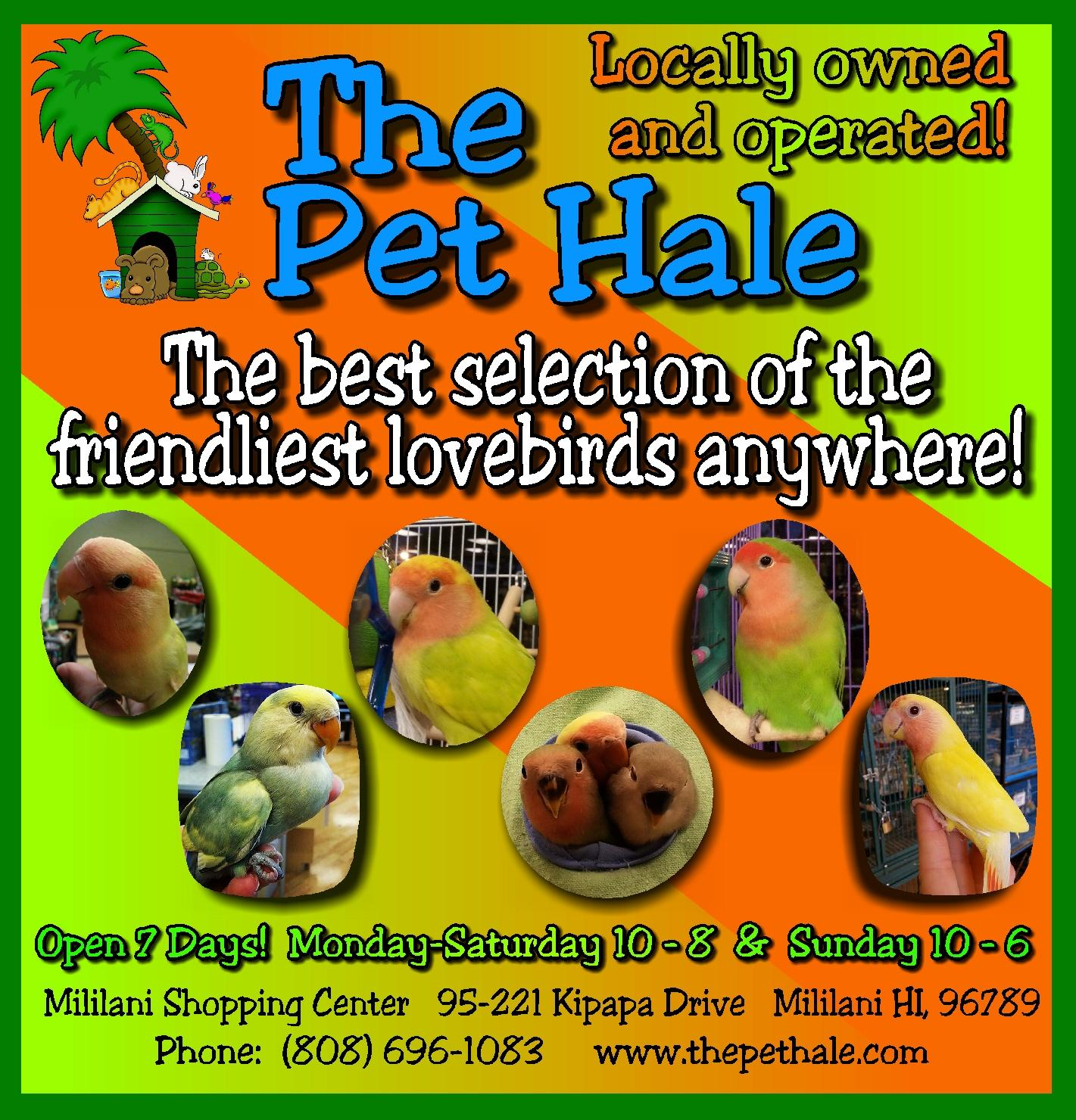 Hawaii S Home For The Friendliest Exotic Birds The Pet Hale